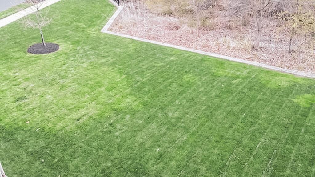 Greener grass from water main break