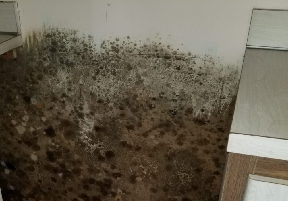 Mold exposed on the wall behind a kitchen appliance