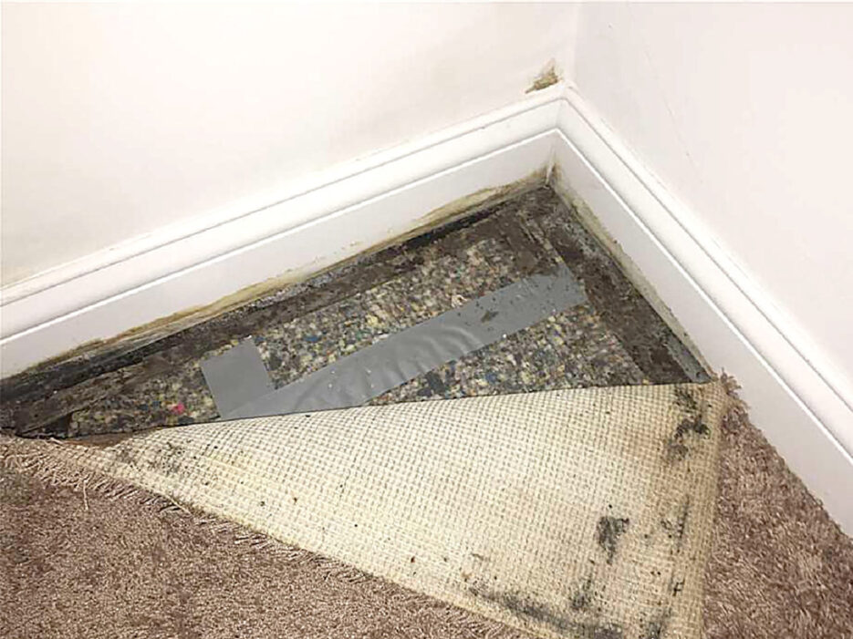 Water damage exposed as a carpet is pulled back
