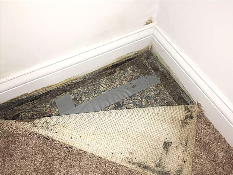 Carpet pulled back with wet carpet beneath